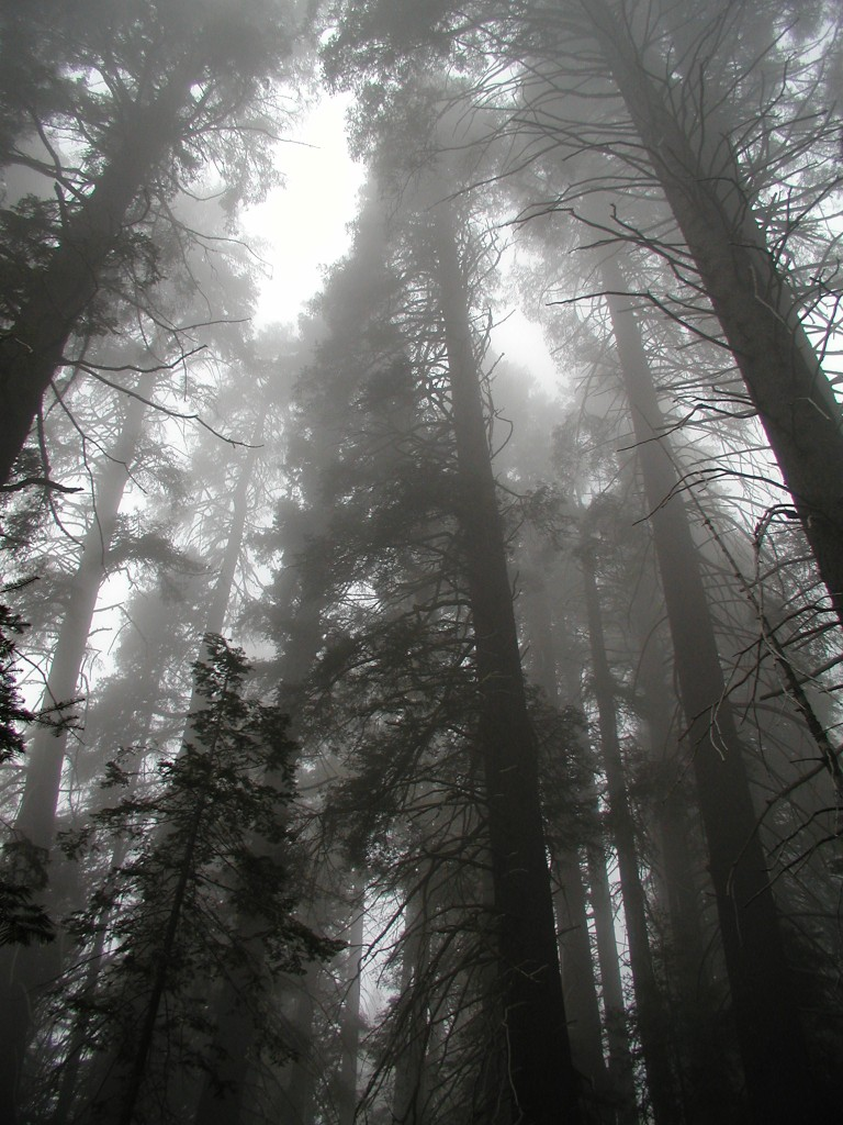 Your weekend moment of Zen, brought to you once again this week from the majestic foothils of Sequoia National Forest.