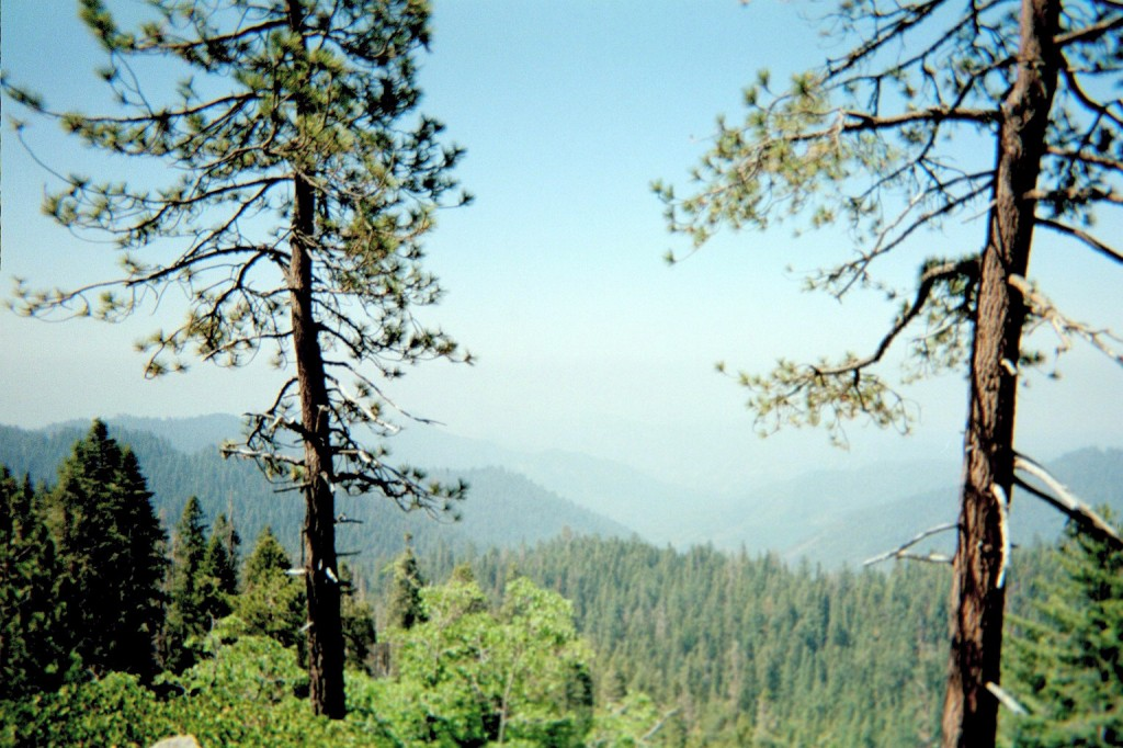 Your weekend Moment of Zen brought to you this week from Sequoia National Forest.